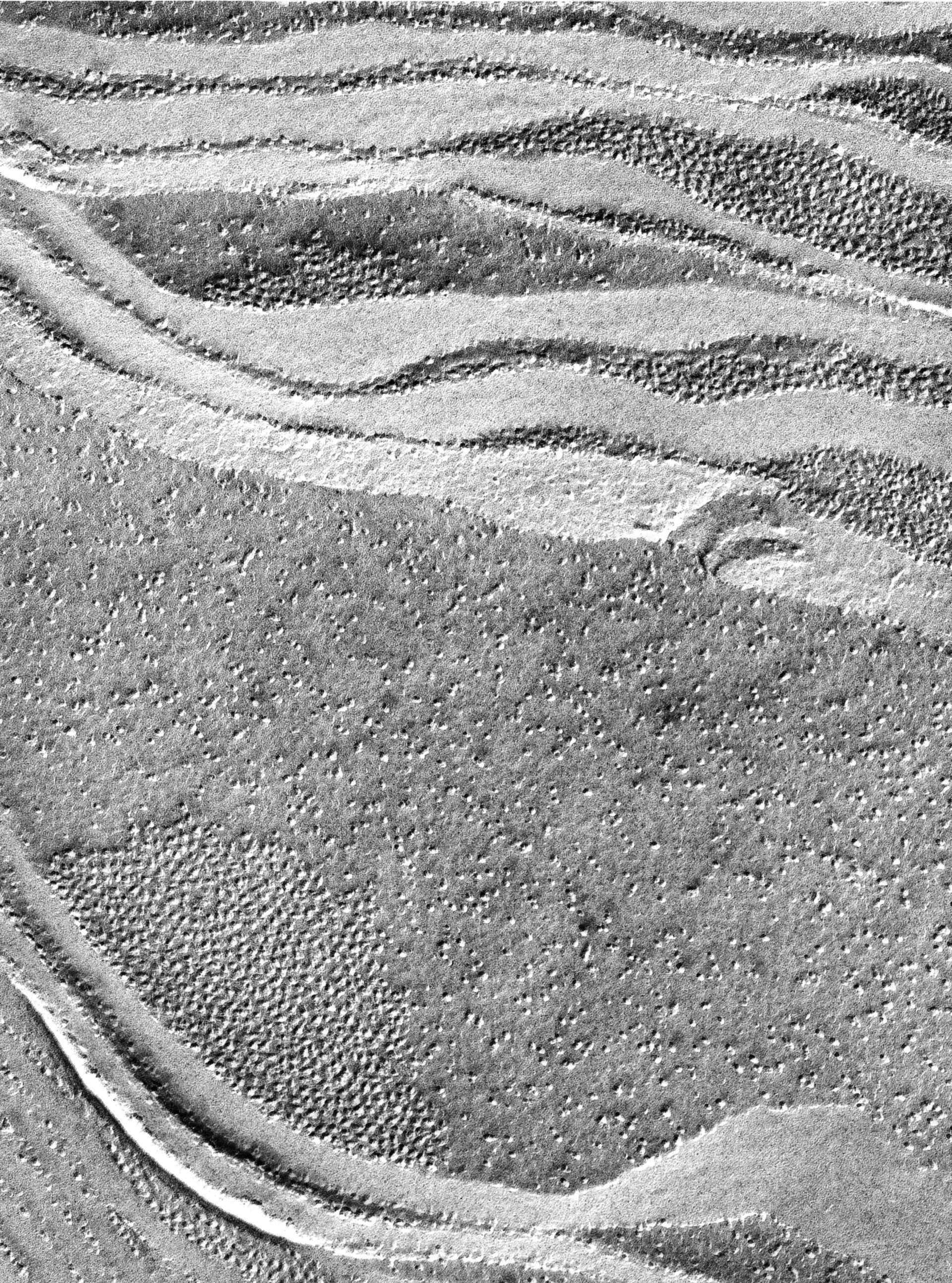 Prochloron (Thylakoid) - CIL:16461