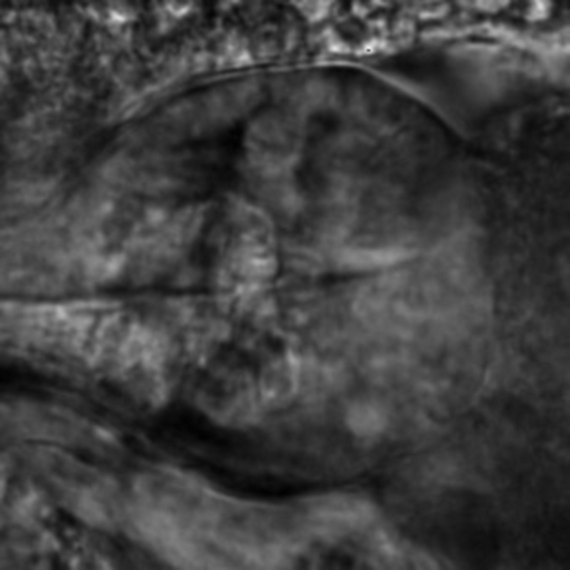 Caenorhabditis elegans - CIL:2234