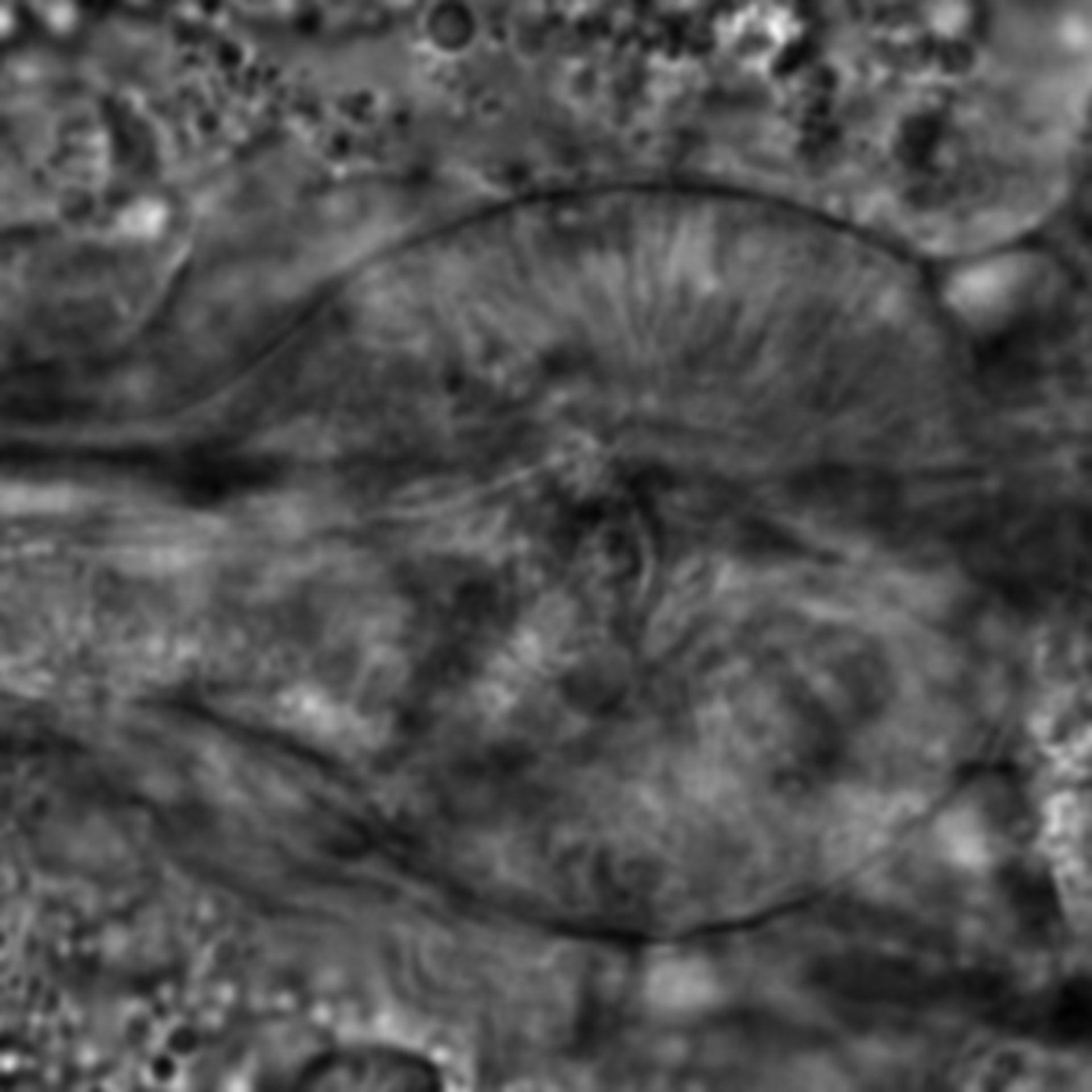 Caenorhabditis elegans - CIL:2175