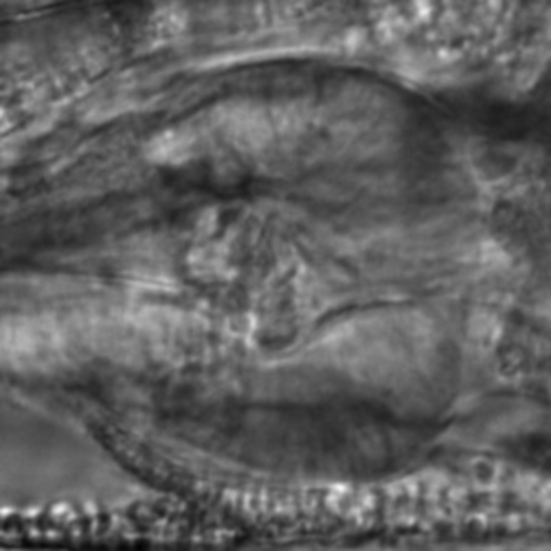 Caenorhabditis elegans - CIL:2769