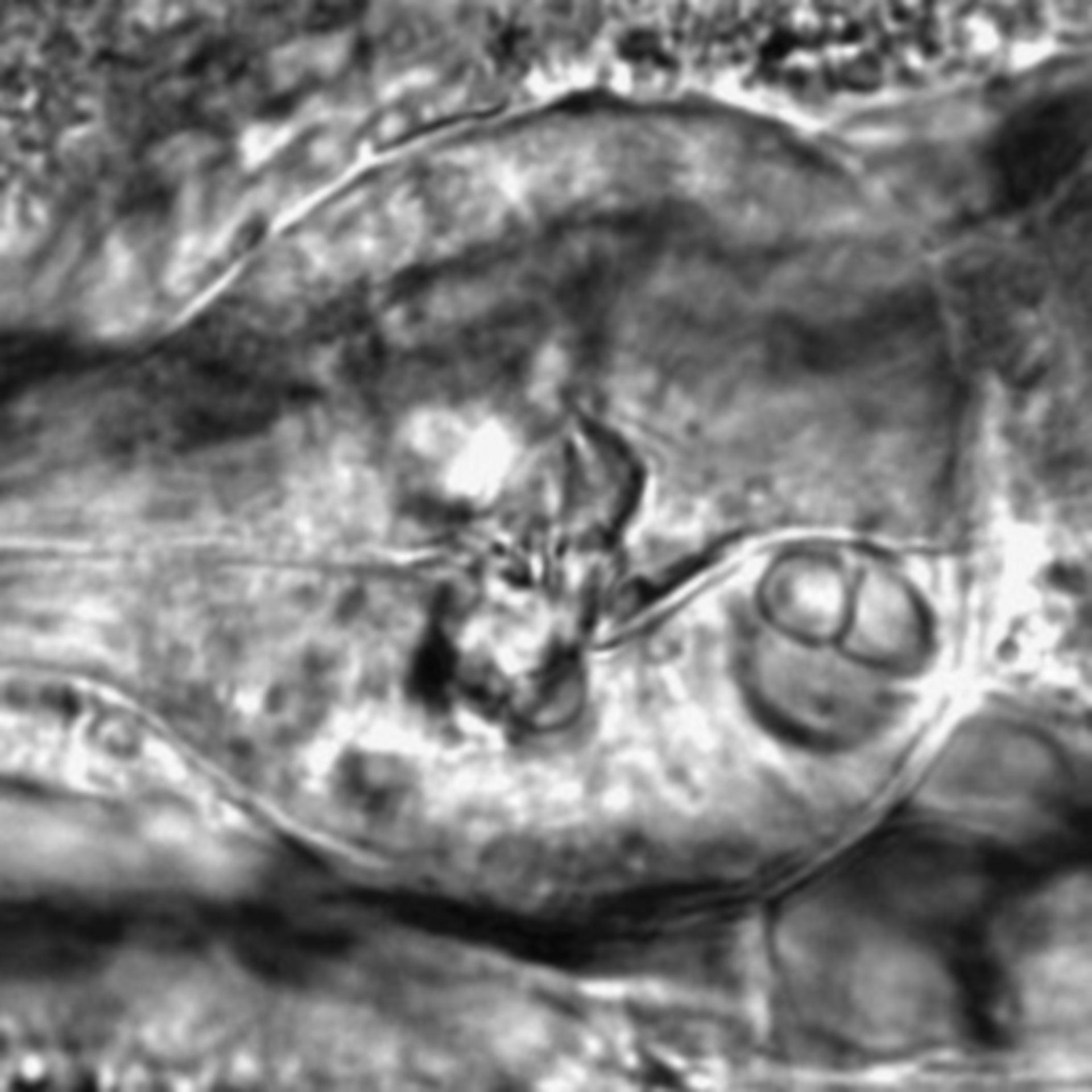 Caenorhabditis elegans - CIL:2726