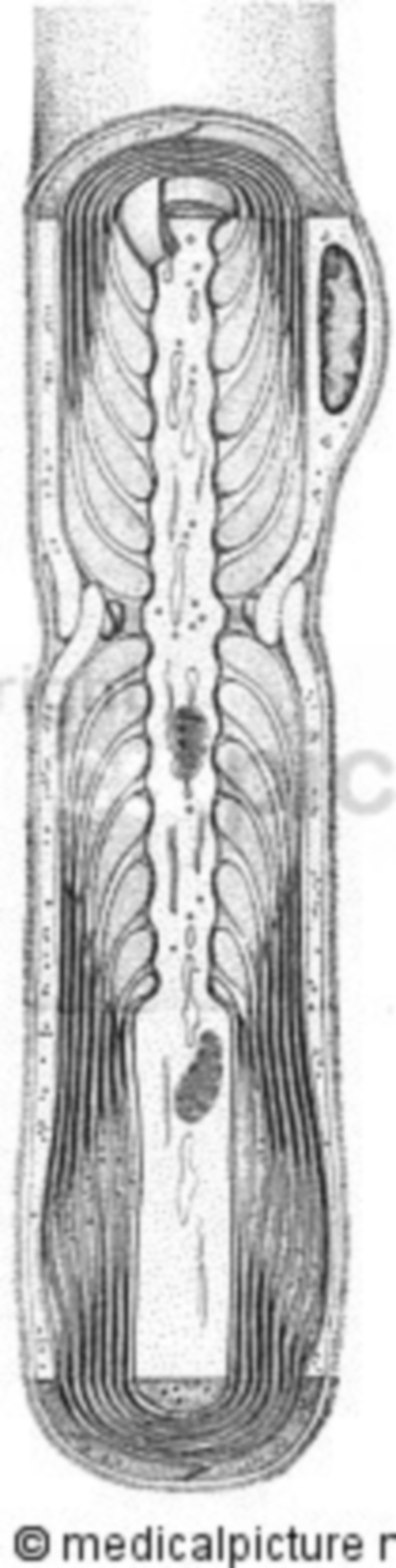 Nerve fibers with myelin sheaths