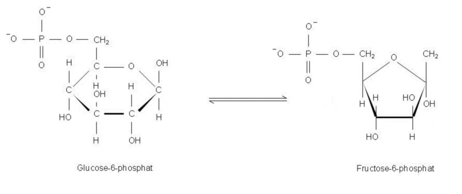 Isomerizzazione del glucosio-6-fosfato in fruttosio-6-fosfato