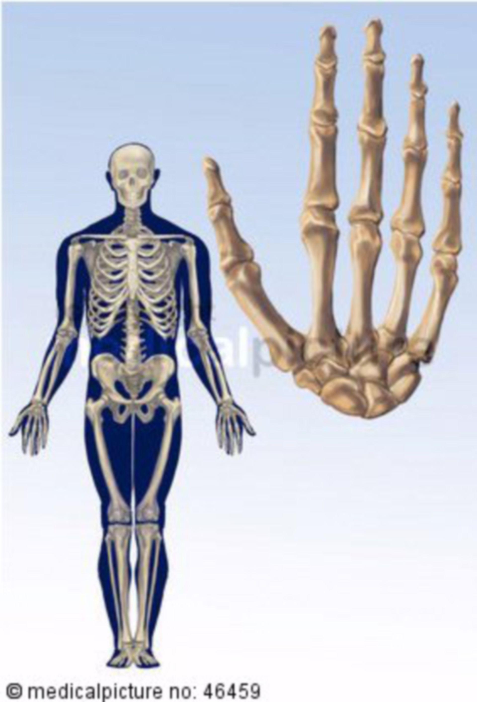 Meschliches Skelett und Handknochen