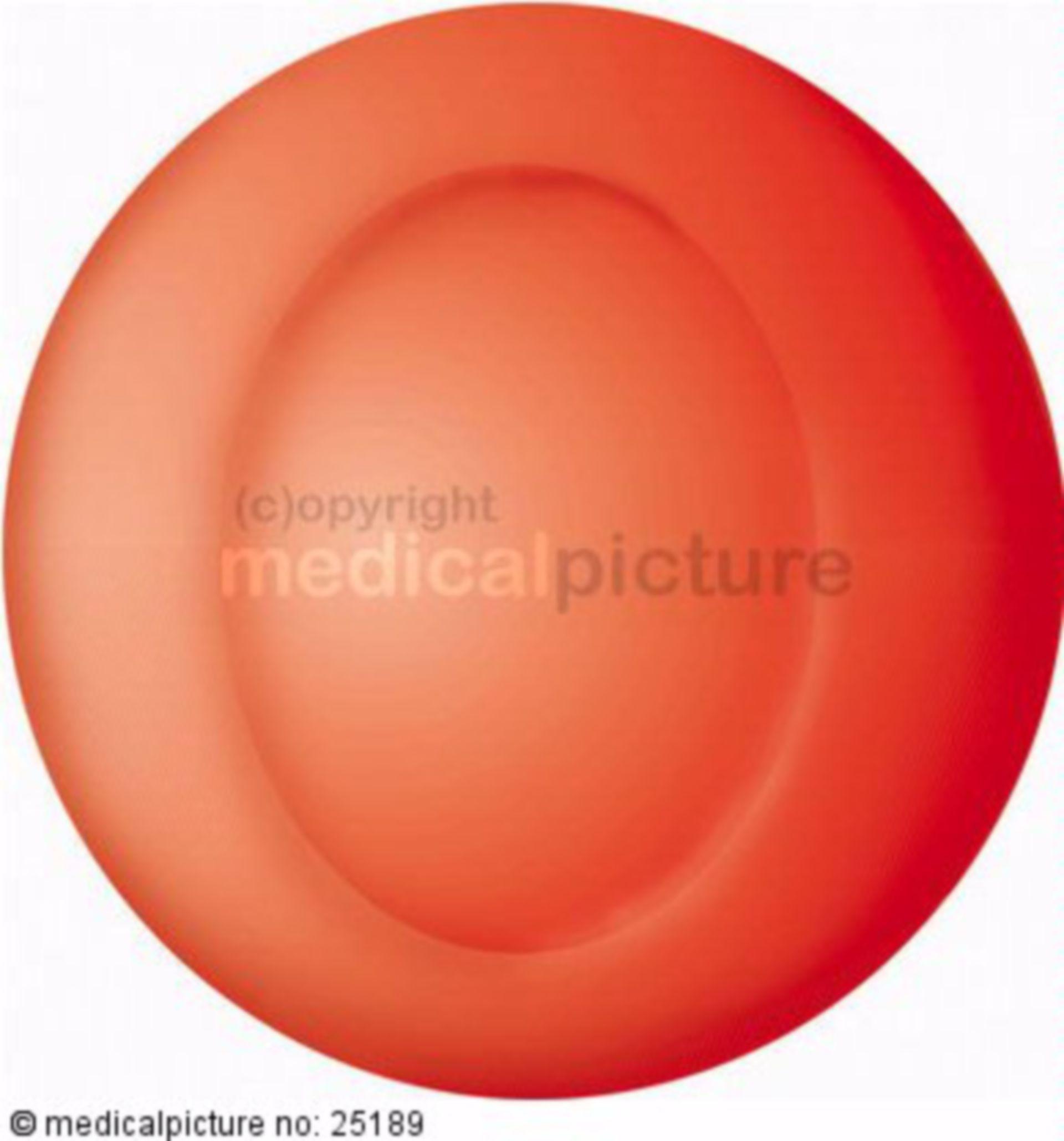 Rotes Blutkörperchen (Erythrozyt)