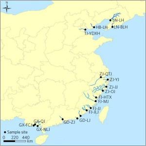 Die Bakterien stammen aus Flussmündungen entlang Chinas 4.000 km langer Küste. Credit: Zhu et al. /Nature Microbiology.