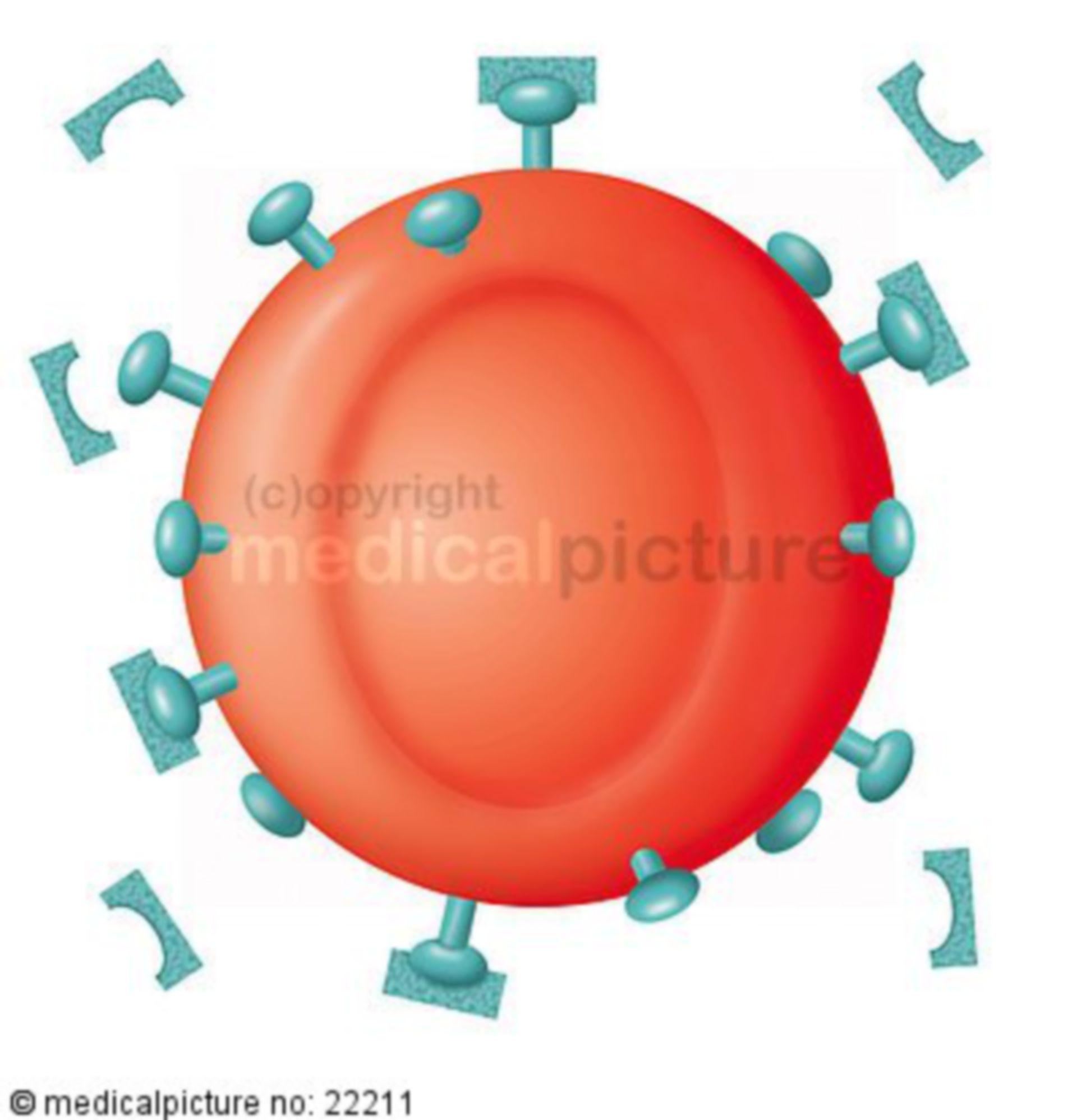 Sepsi, antigeni sugli eritrociti