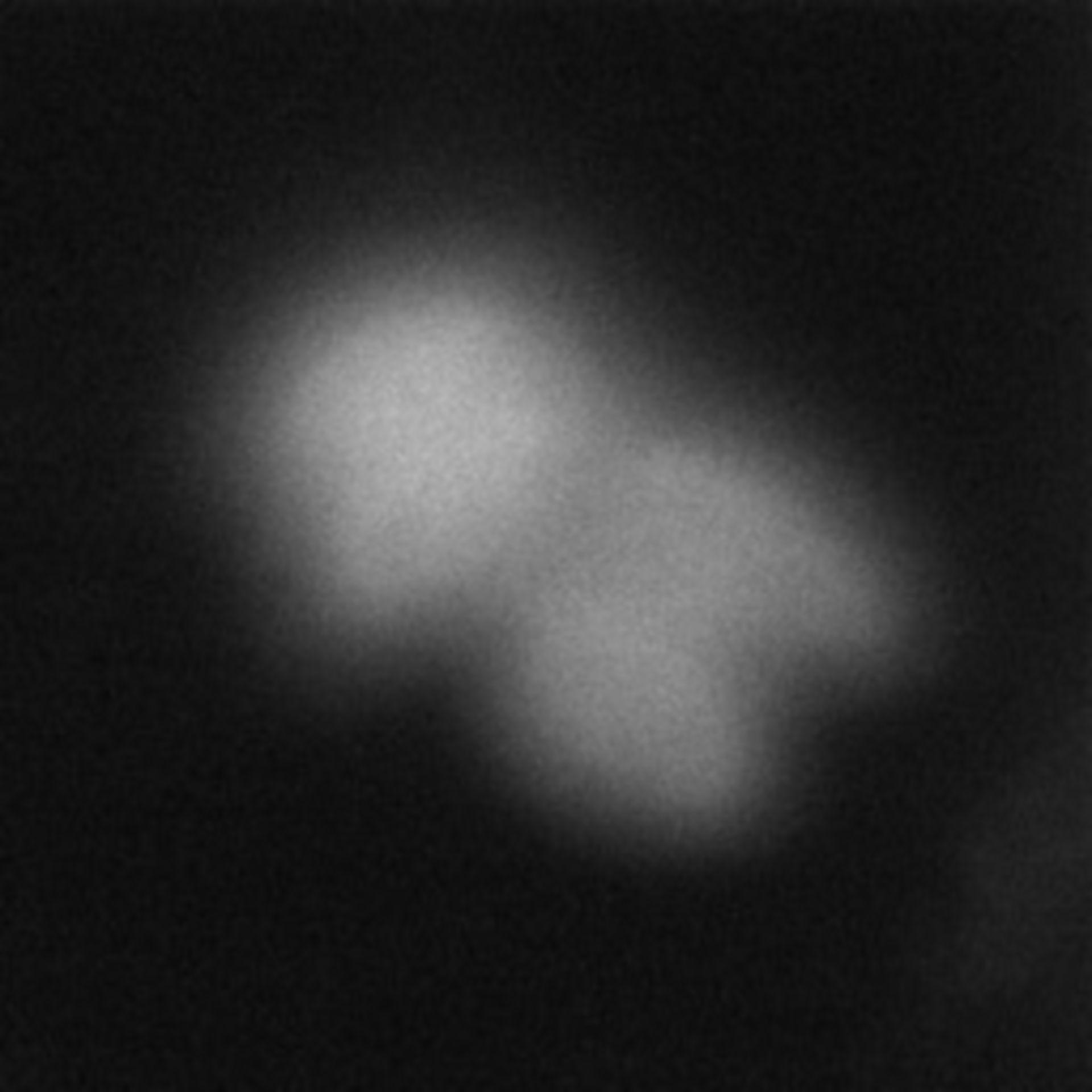 Toxoplasma gondii RH (Cortical microtubule) - CIL:10485