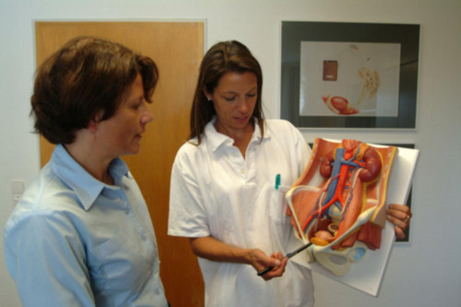 Kidneys (model)
