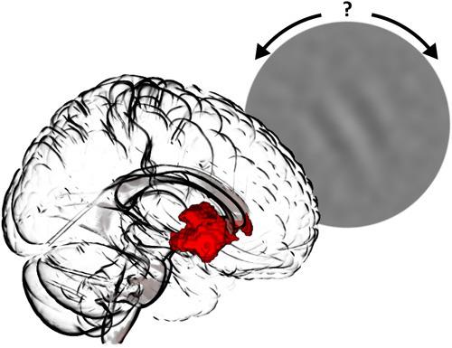Probanden lösen Wahrnehmungsaufgaben: Die eigene Zuversicht über die Orientierung eines visuellen Reizes aktiviert hierbei eine Gehirnregion im limbischen System. © Charité