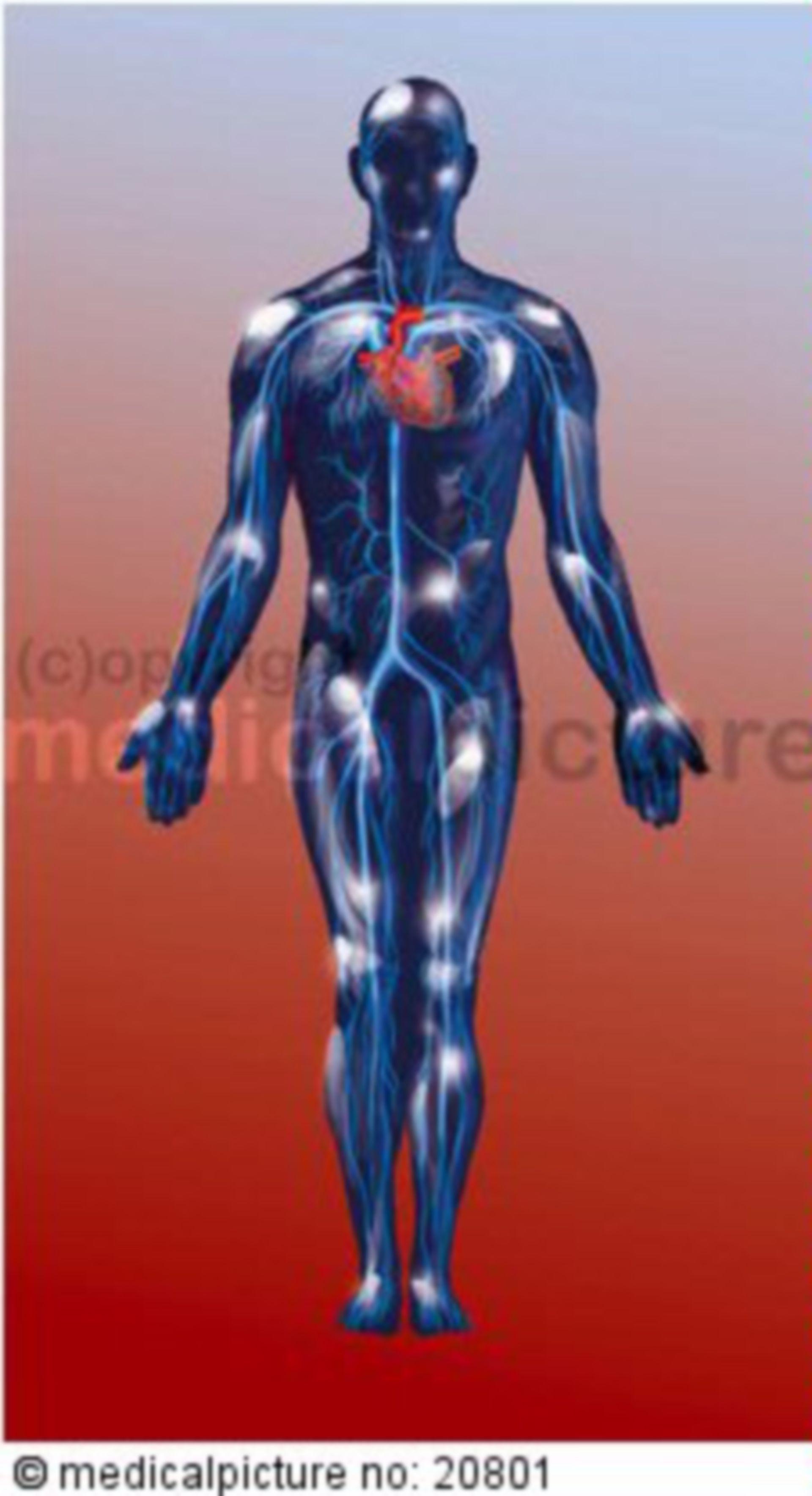 Venöses System des menschlichen Blutkreislaufs