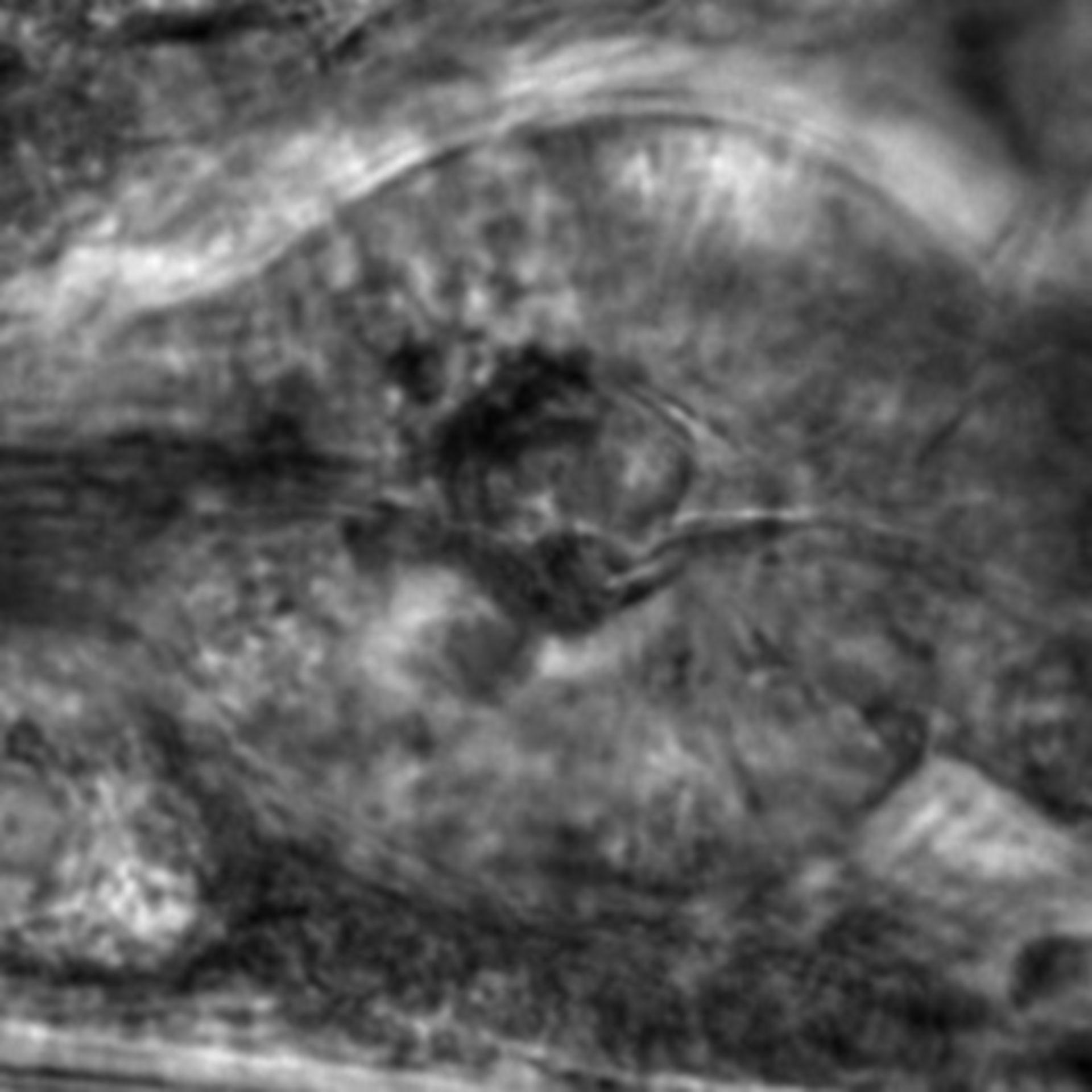Caenorhabditis elegans - CIL:2678