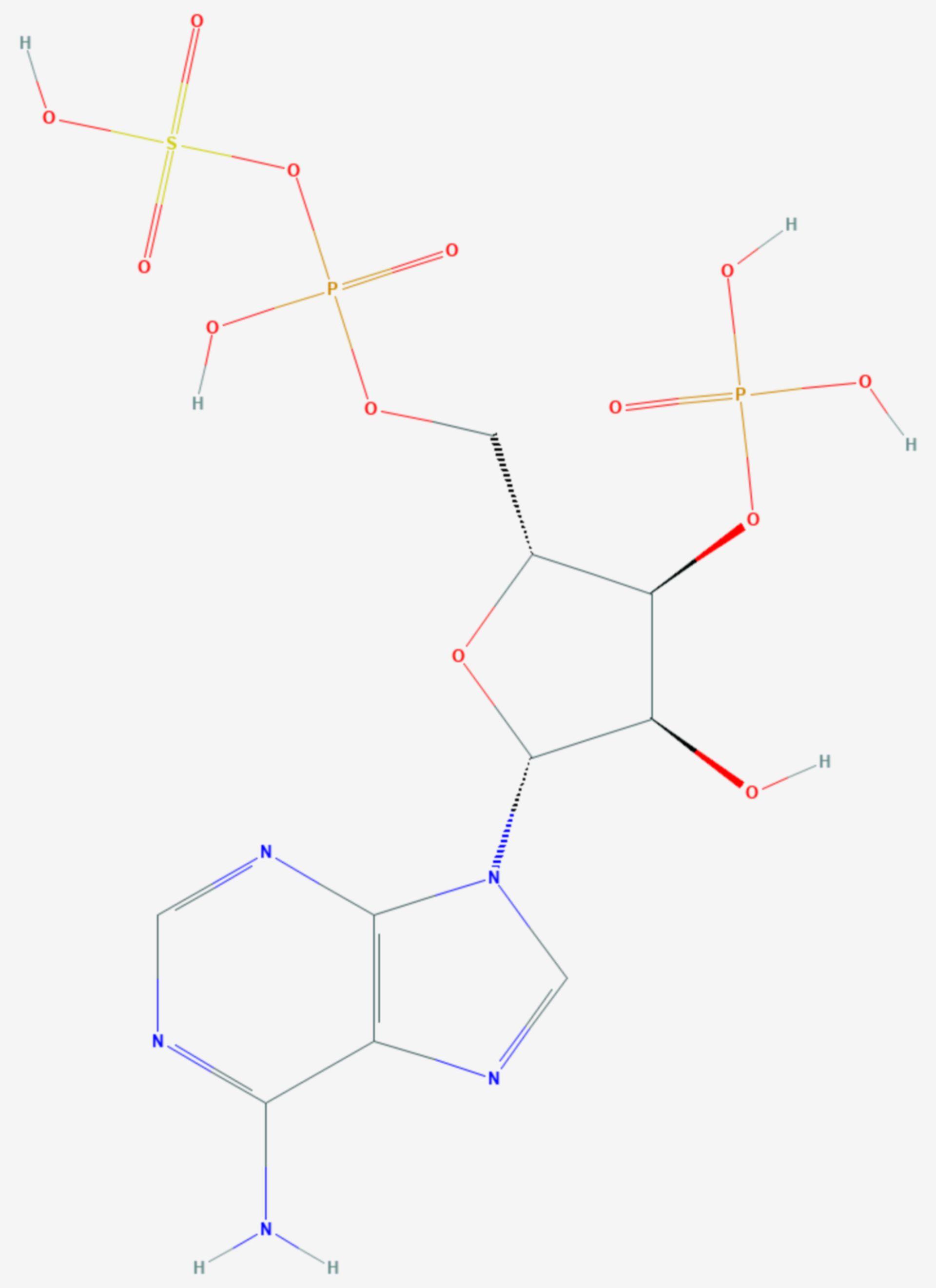 3′-Phosphoadenosin-5′-phosphosulfat (Strukturformel)