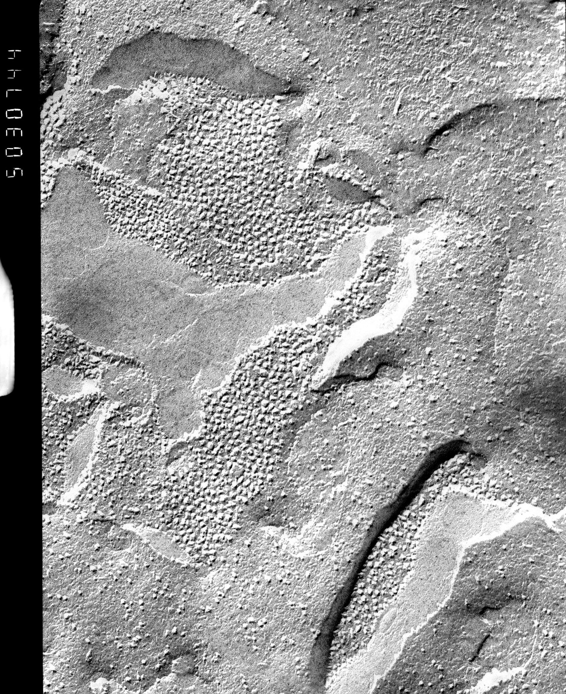 Prochloron (Thylakoid) - CIL:13860
