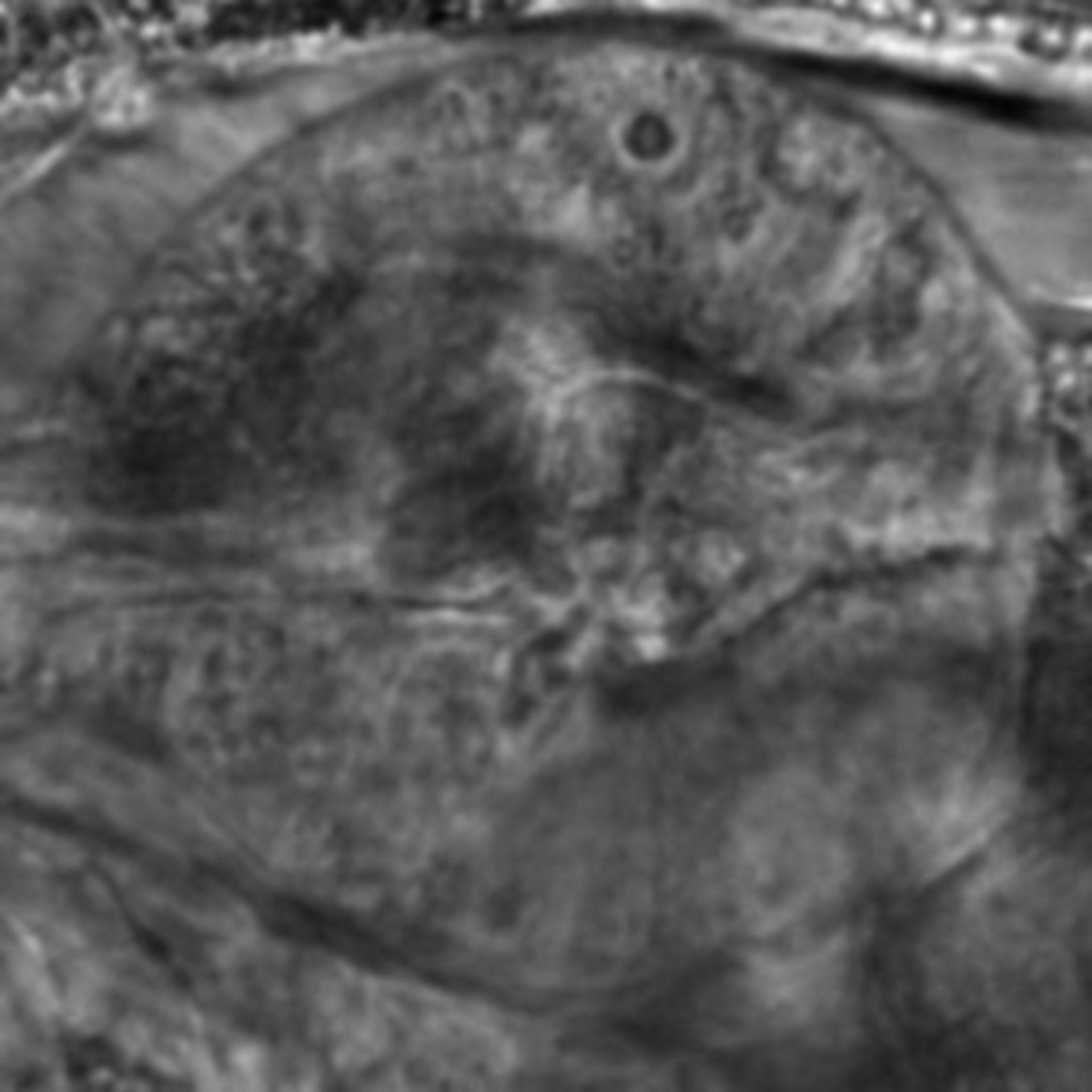 Caenorhabditis elegans - CIL:2568