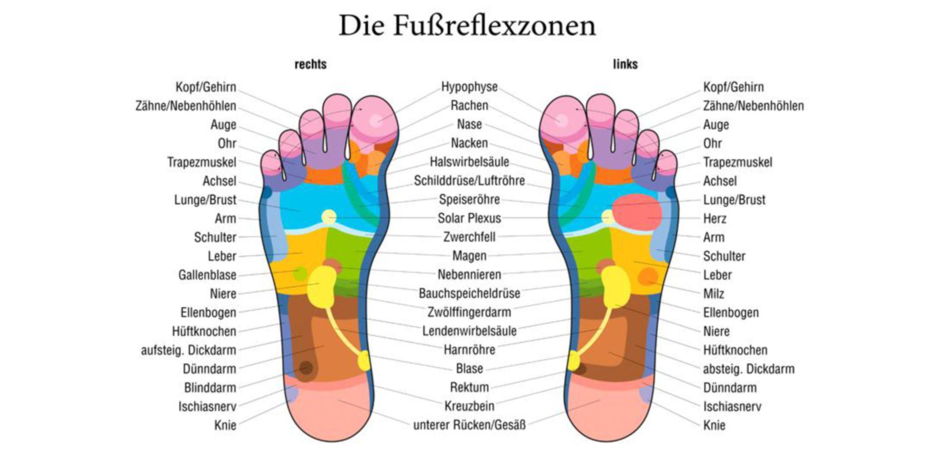 Zonas reflexivas del pie
