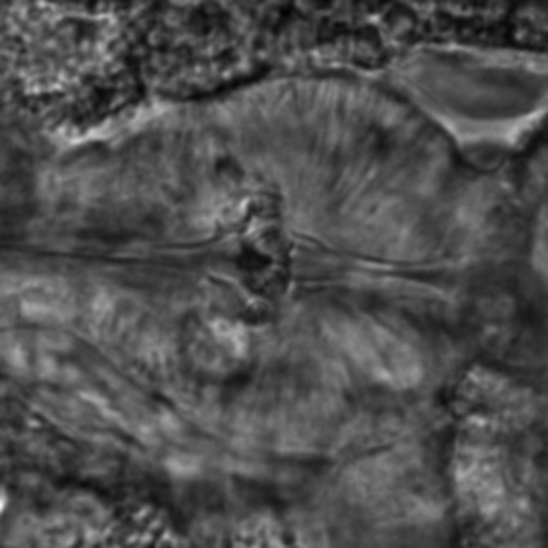 Caenorhabditis elegans - CIL:2200