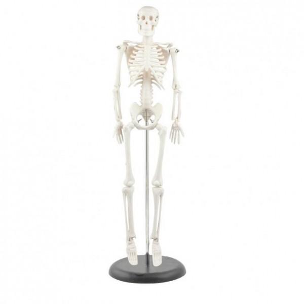 Mini-Skelett