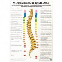 Rüdiger Anatomie Lehrtafel – Wirbeltherapie nach Dorn