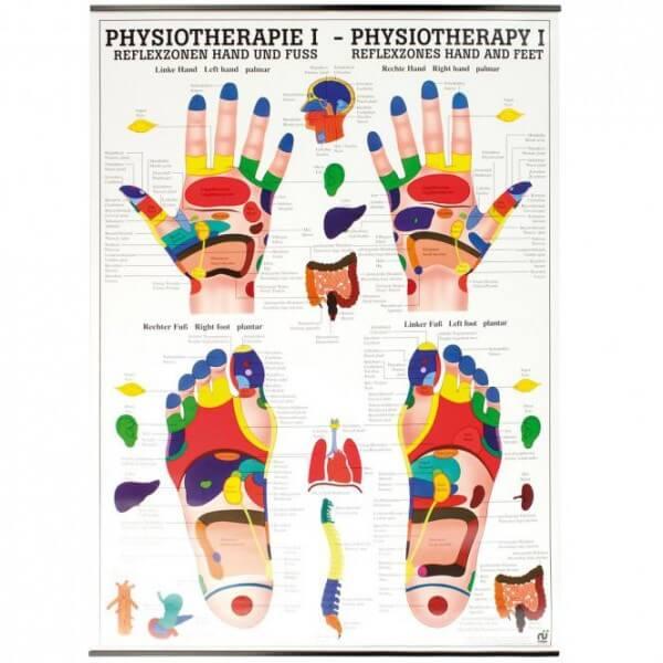 Lehrtafel - Reflexzonen Hand und Fuß