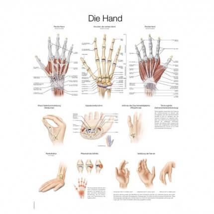 Lehrtafel – Die Hand