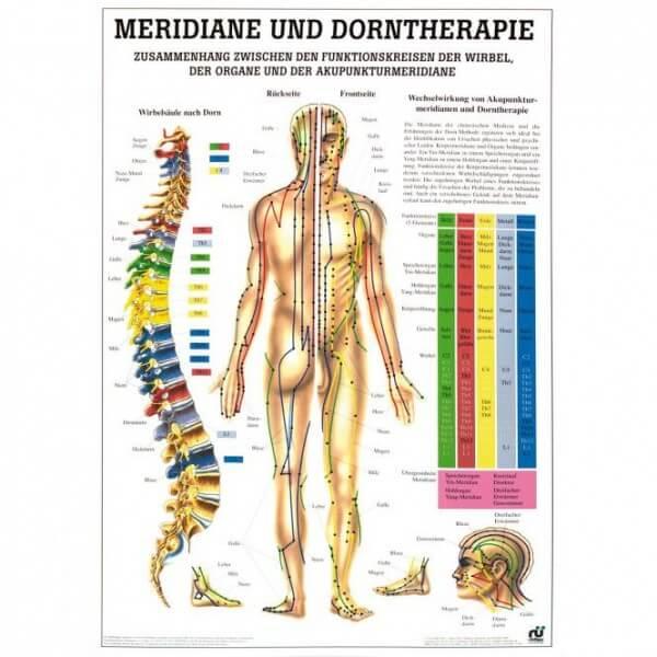 Lehrtafel - Meridiane und Dorntherapie