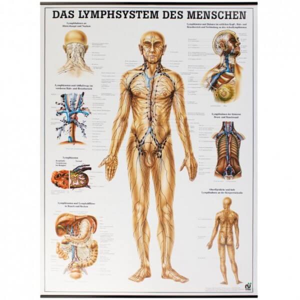 Lehrtafel - Das Lymphsystem des Menschen