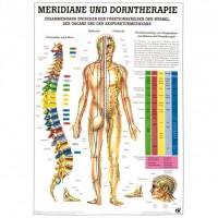 Rüdiger Anatomie Lehrtafel - Meridiane und Dorntherapie