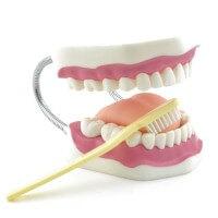 Dr. No Zahnpflegemodell mit Zahnbürste