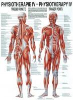 Rüdiger Anatomie Lehrtafel – Trigger Punkte