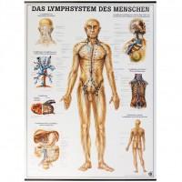 Rüdiger Anatomie Lehrtafel - Das Lymphsystem des Menschen