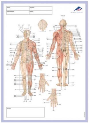 Bloc-notes méridien d'acupuncture