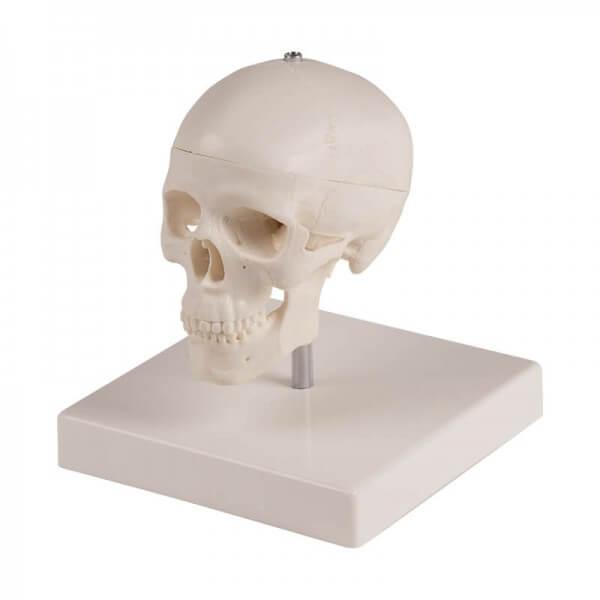 Miniatur Schädel mit Stativ