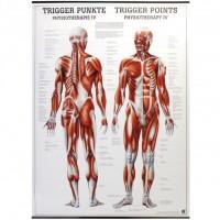 Rüdiger Anatomie Lehrtafel - Trigger Punkte